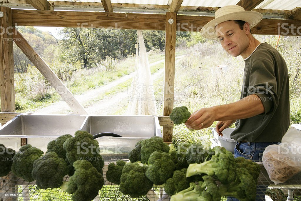 Farmer Preparing for Community Farmer's Market stock photo