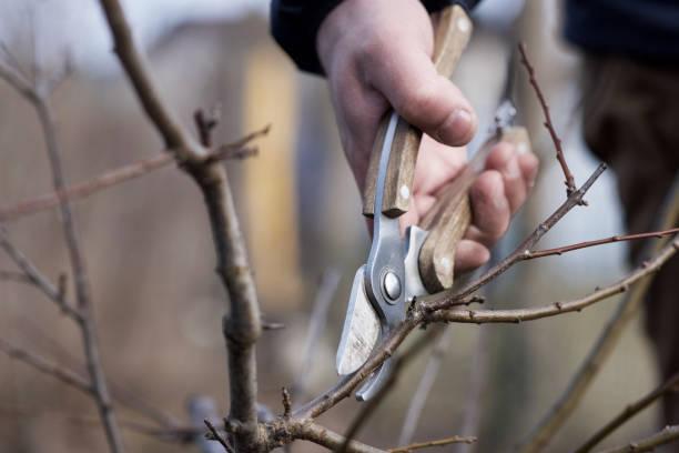 Landwirt beschnitt Obstbäume im Frühlingsgarten – Foto