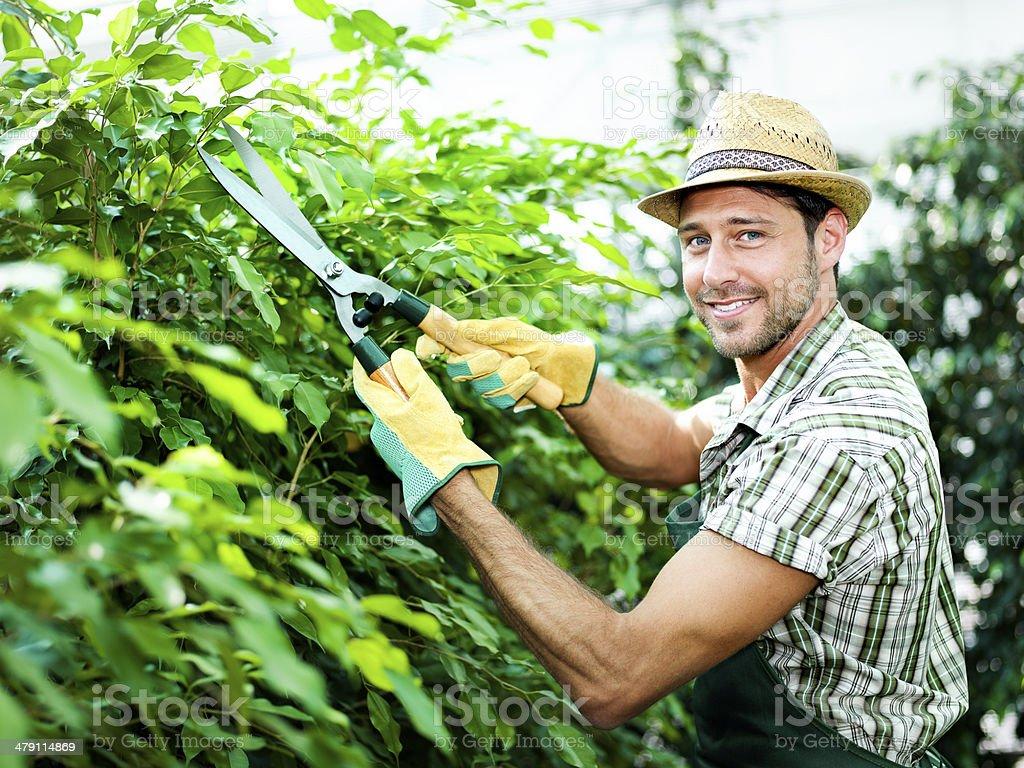 farmer pruning plants stock photo
