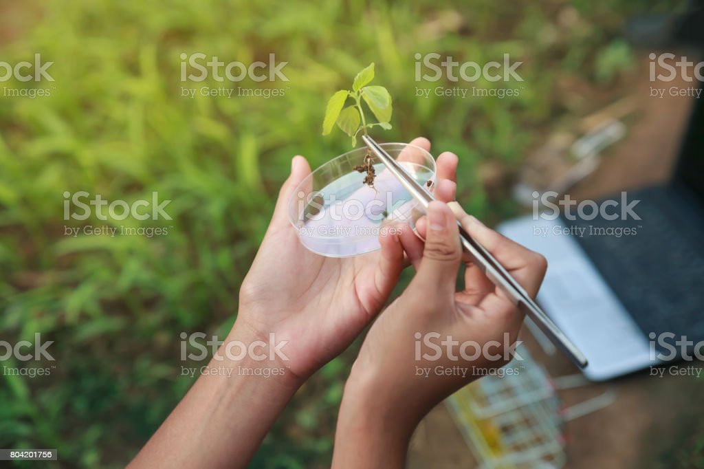 Farmer researching growth of plant in greenhouse. Agriculture concept. stock photo