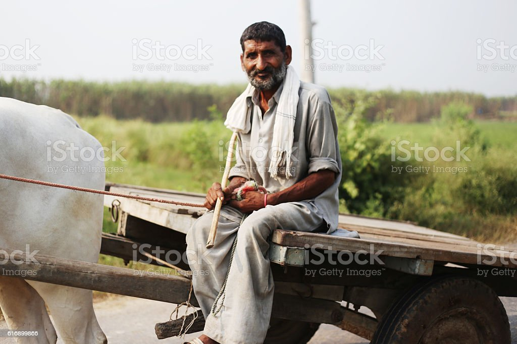 Farmer Riding Oxcart stock photo