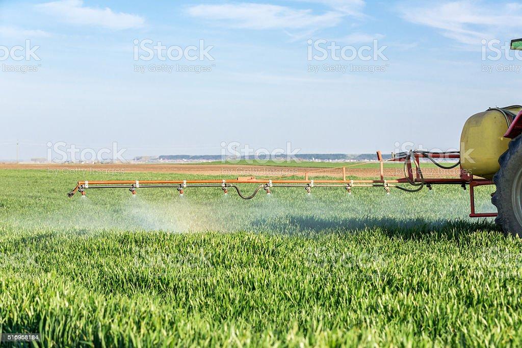 Farmer spraying green wheat field stock photo