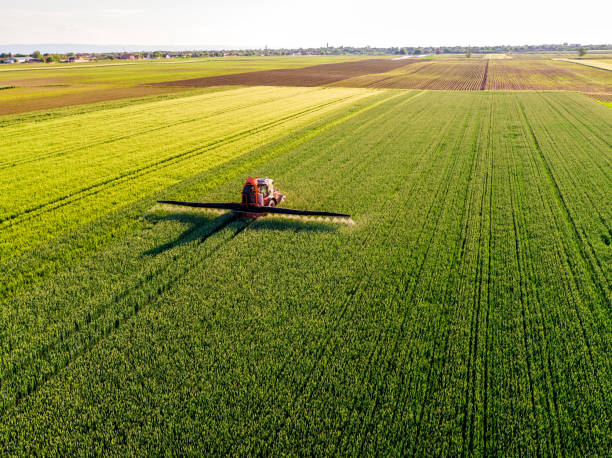 farmer spraying green wheat field - genetic modification stock photos and pictures