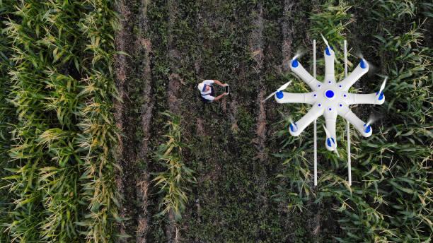 농부는 무인 항공기를 사용 하 여 그의 작물 살포 - 농업 뉴스 사진 이미지