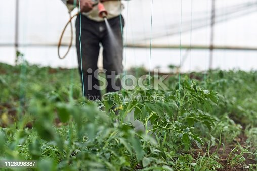 Farmer spraying pesticide his crops in his greenhouse