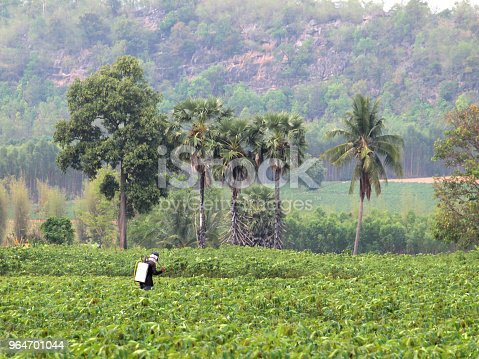 Farmer Spraying Pesticide In The Cassava Field Stock Photo & More Pictures of Agricultural Machinery