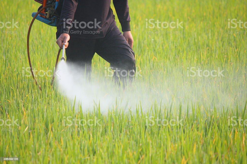 Agricultor jogando pesticidas no campo de arroz - foto de acervo