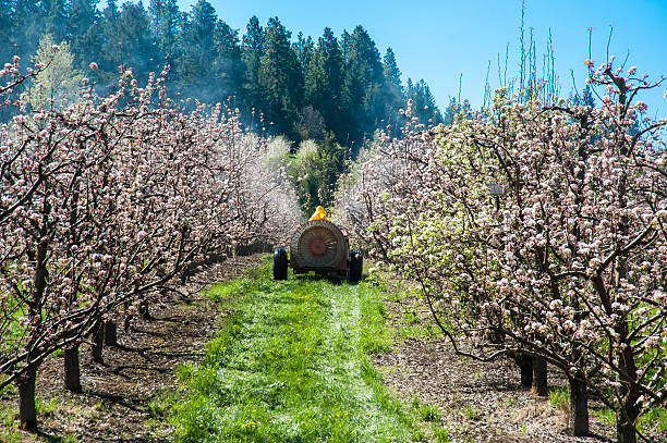 Farmer spraying pesticide on apple trees Farmer spraying pesticide on apple trees from a tractor hood river valley stock pictures, royalty-free photos & images
