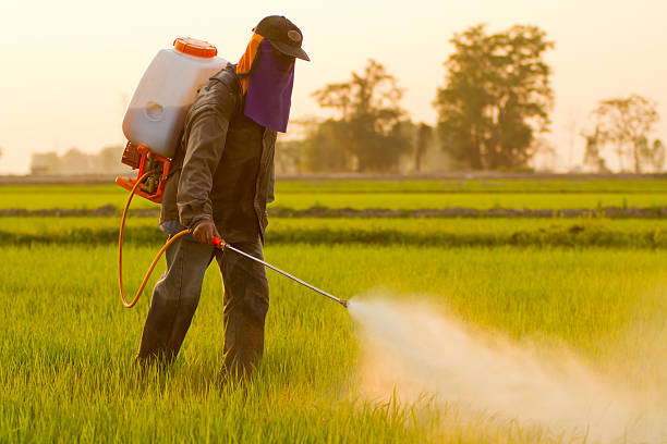 Farmer spraying pesticide Farmer spraying pesticide in Thailand crop sprayer stock pictures, royalty-free photos & images