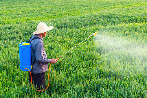 Farmer Spraying Pesticides In The Fields Stock Photo - Download Image Now
