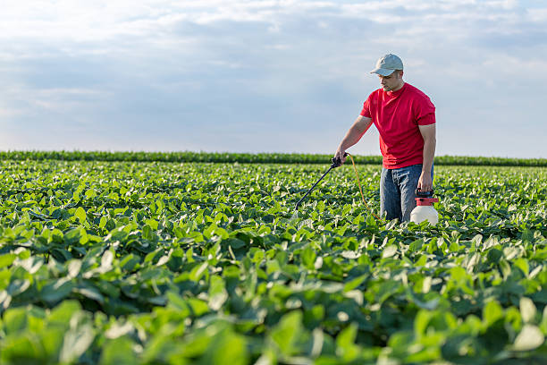 Farmer spraying soybean plants Farmer spraying soybean plants herbicide stock pictures, royalty-free photos & images