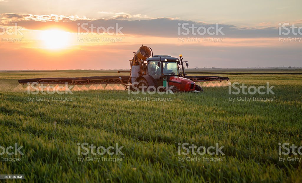 Farmer spraying wheat field at spring season, herbicides, pesticides stock photo