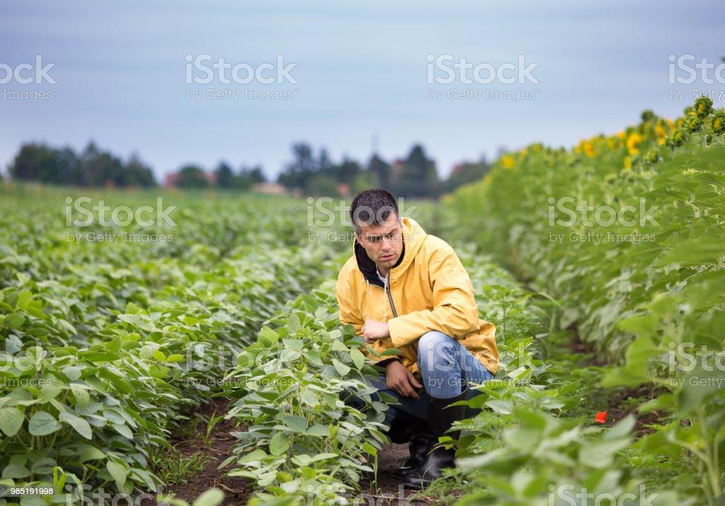 Landwirt hocken in Soja-Feld – Foto