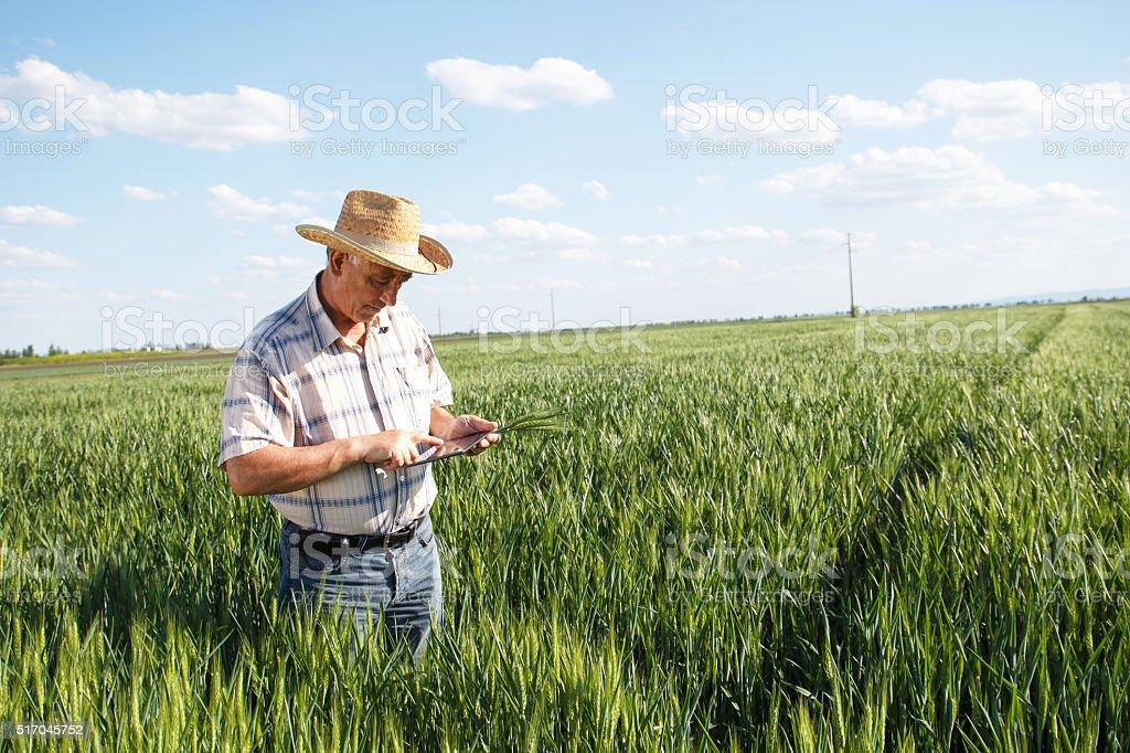 Farmer pie en un campo de trigo y mirando en comprimido - foto de stock