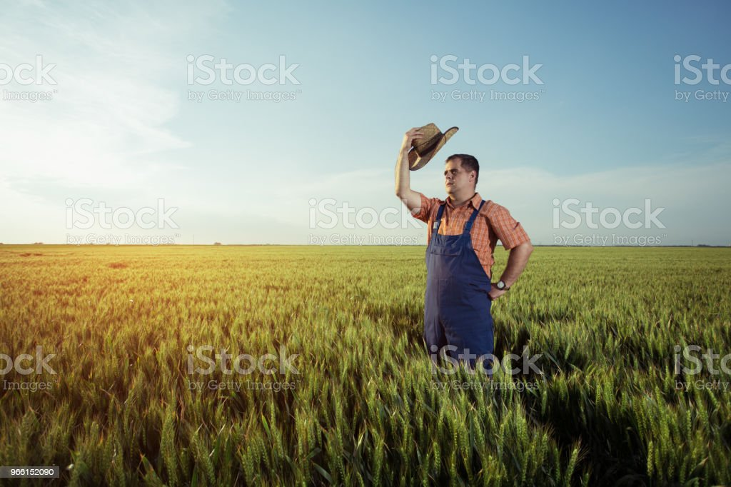 Farmer standing in a wheat field - Royalty-free Adult Stock Photo