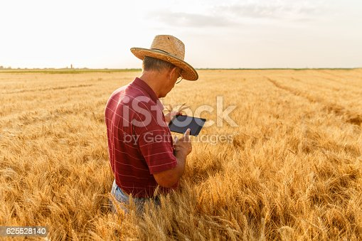 istock Farmer standing in a wheat field with a tablet 625528140