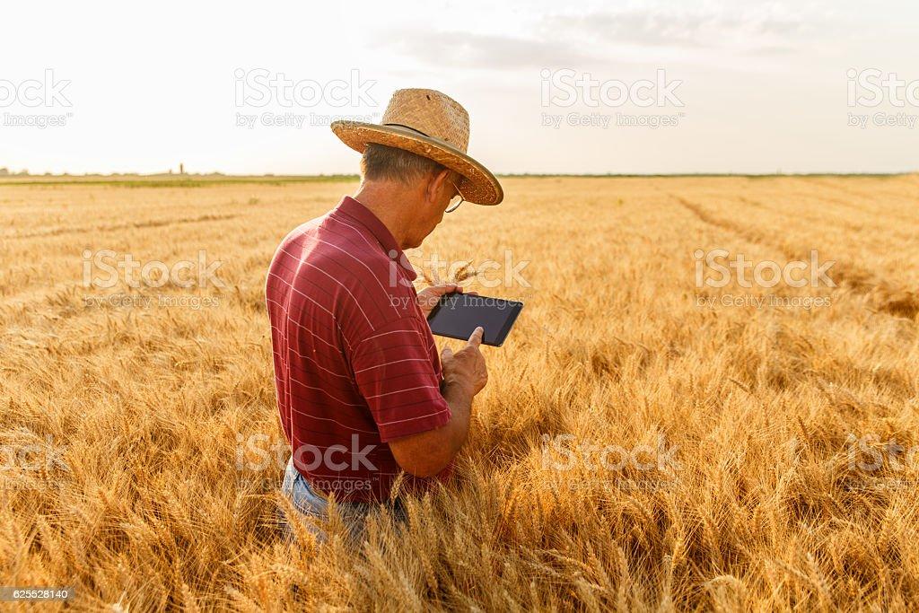 Farmer parado en un campo de trigo con un comprimido - foto de stock
