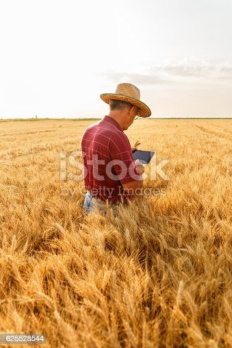 istock Farmer standing in a wheat field with a tablet 625528544