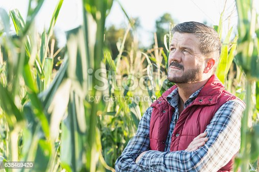 A farmer, mature man in his 50s, standing in the middle of a field of corn on a sunny day, looking upward with a serious, contemplative expression on his face, arms folded across his chest.