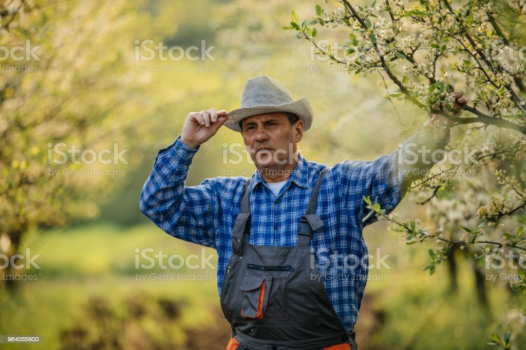 Farmer standing in orchard - Royalty-free Active Seniors Stock Photo