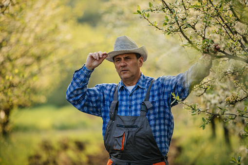 Farmer Standing In Orchard Stock Photo - Download Image Now