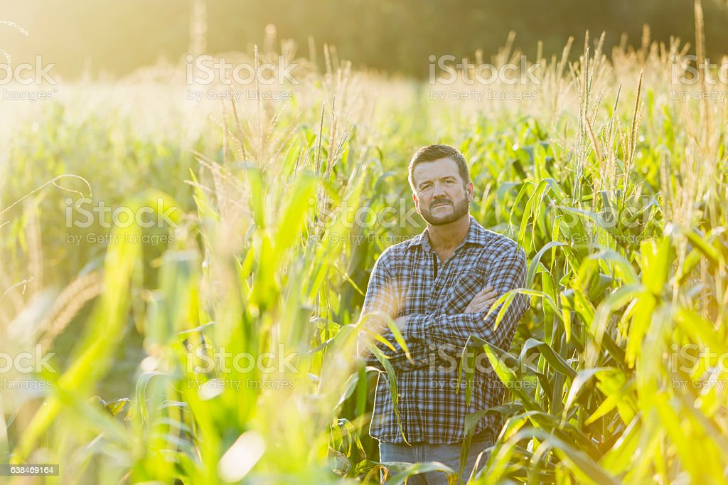 Farmer standing in sunny corn crop field stock photo
