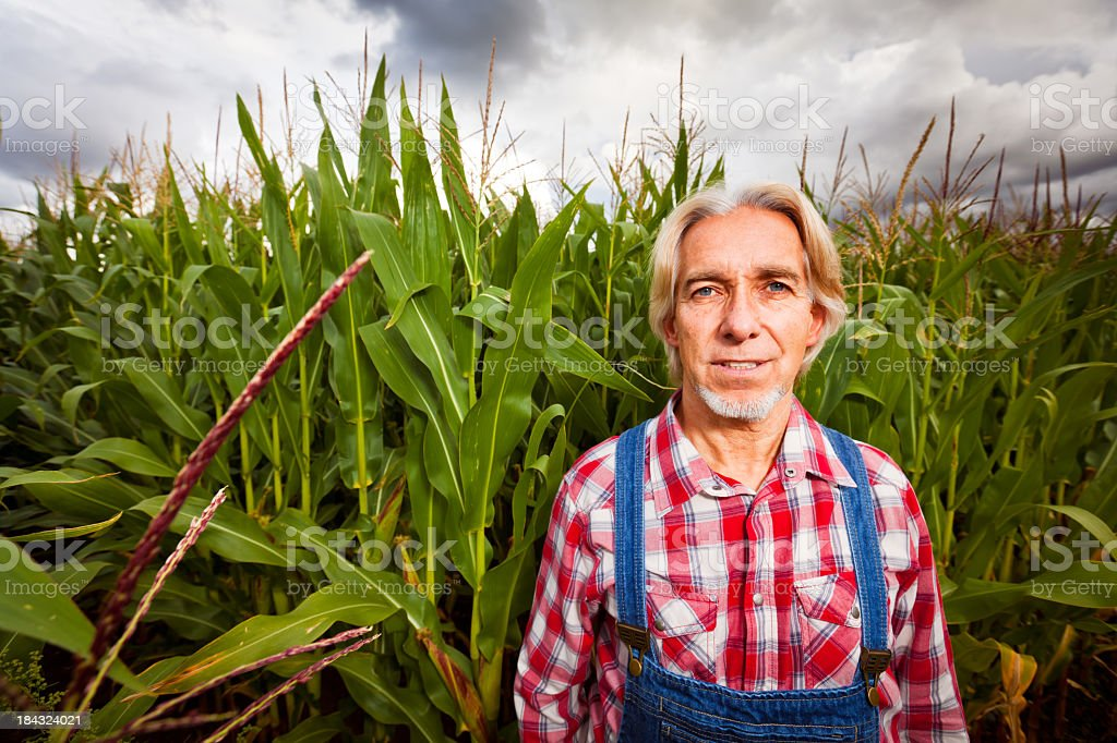 farmer standing next to a corn field royalty-free stock photo