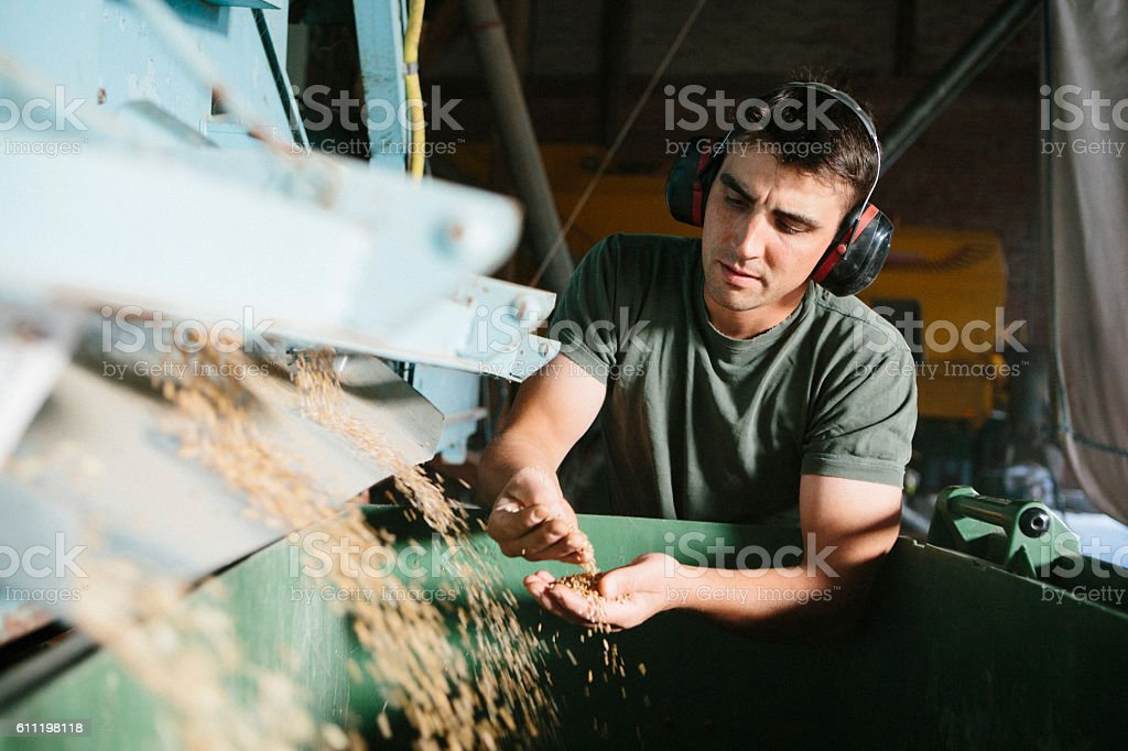 farmer stands next to machine, which separates grains for seeds stock photo