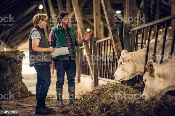 Farmer talking to inspector in a barn picture id942799038?b=1&k=6&m=942799038&s=612x612&h=yakav7xvveaqbtasshn zzeyddipmyftr9bwcdb1ebm=