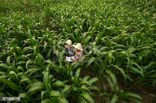 istock Farmer teaching student in the filed 671899178