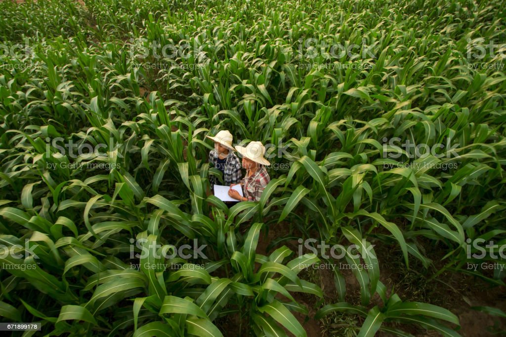 Farmer teaching student in the filed stock photo