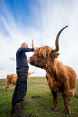 A farmer standing near a Highland Cow with long curving horns reaches out to touch the animal standing on the moor. Highland cattle, or hairy coos, are a distinctive pedigree breed with long, thick flowing hair and sweeping horns that date from 1884 that thrive in difficult climates and conditions, Isle of Lewis, Outer Hebrides, Scotland, UK, Europe