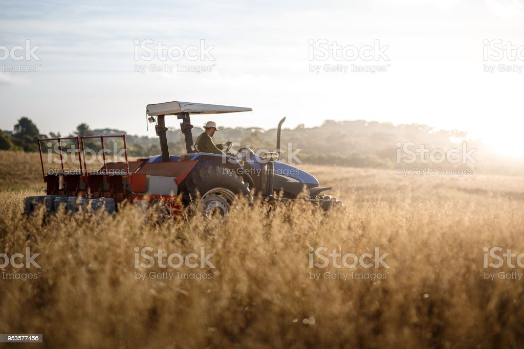 Farmer tractor driver picking stock photo