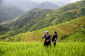 Woman with long hair looks at rice fields in Cat Cat village in Vietnam