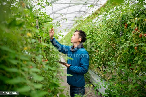 istock Farmer using a digital tablet in a greenhouse 515481442