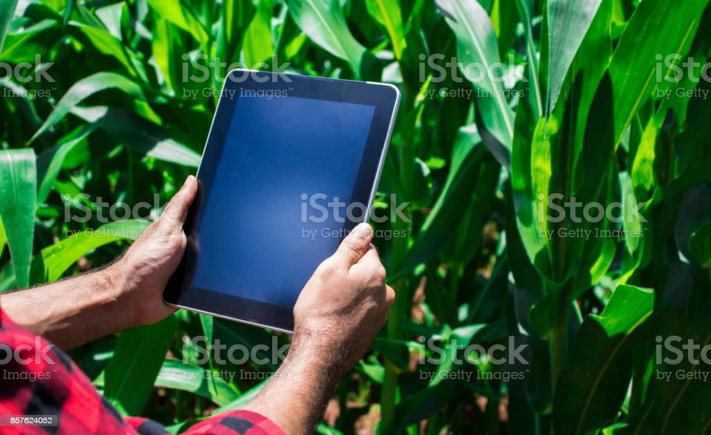 Farmer using digital tablet computer in cultivated corn field plantation. stock photo