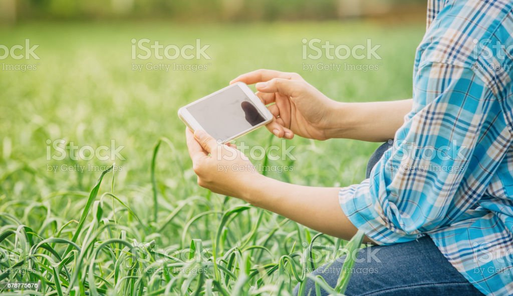farmer using mobile phone to inspecting garlic royalty-free stock photo