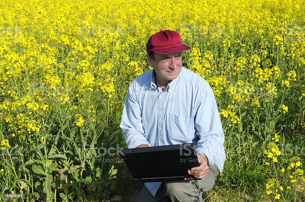 Farmer Using PC in a Canola Field royalty-free stock photo