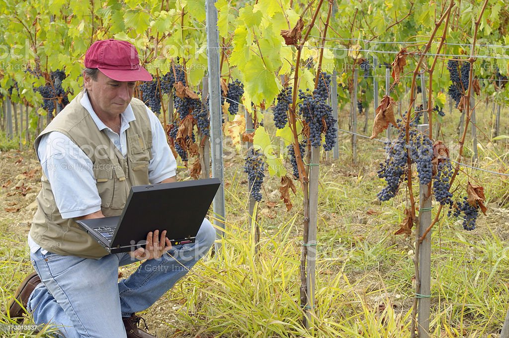 Farmer Using PC in a Vineyard royalty-free stock photo