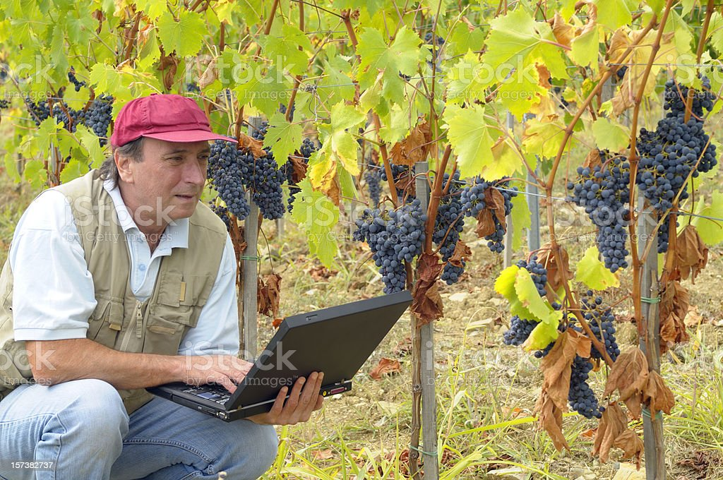 Farmer Using PC in his Vineyard royalty-free stock photo