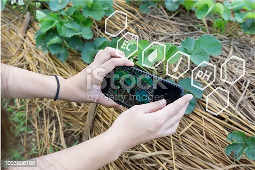 istock Farmer using smartphone checking temperature, humidity, soil pH with on digital holographic screen in strawberries plantation. 1093606168