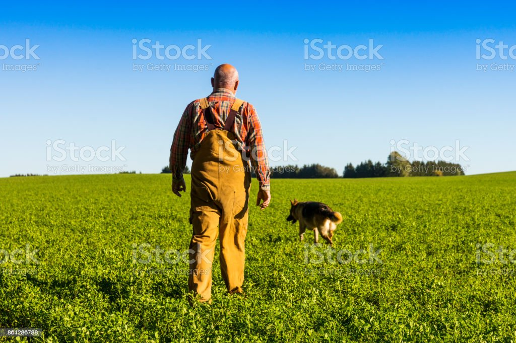 Farmer walking in an alfalfa field with his dog royalty-free stock photo