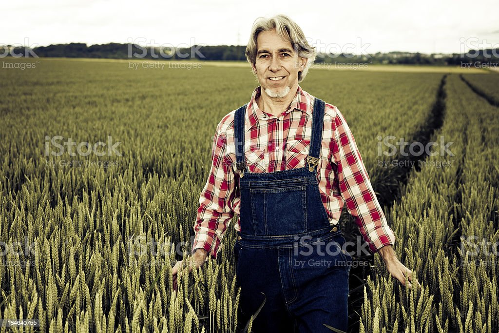 farmer walking through cereal field royalty-free stock photo