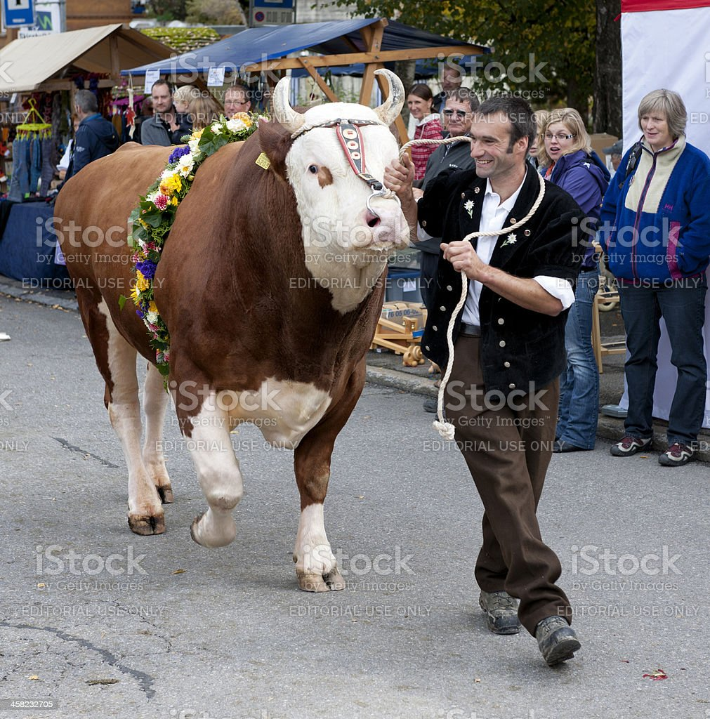 farmer walking with bull in village royalty-free stock photo