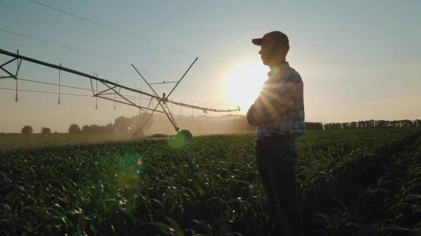 Farmer watching the irrigation cornfield Silhouette of a farmer watching the irrigation of a cornfield using the center pivot sprinkler system at sunset. Watering a cornfield. Camera flies around a man in slow motion irrigation equipment stock pictures, royalty-free photos & images