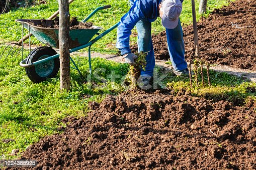 Farmer Wearing Coveralls Picking up Weeds from Garden Preparing to Plant Vegetables - Stock Photo