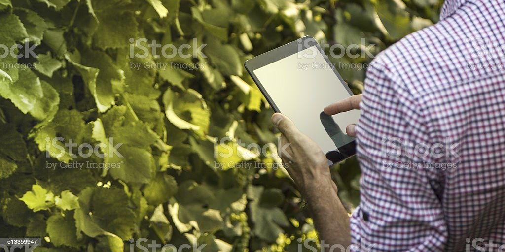 Farmer with a tablet outdoor stock photo