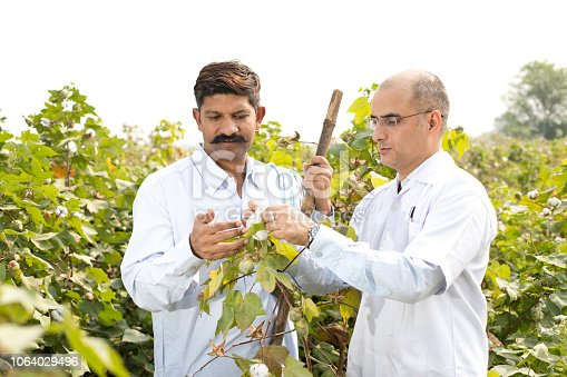 istock Farmer with agronomist checking cotton plant 1064029496