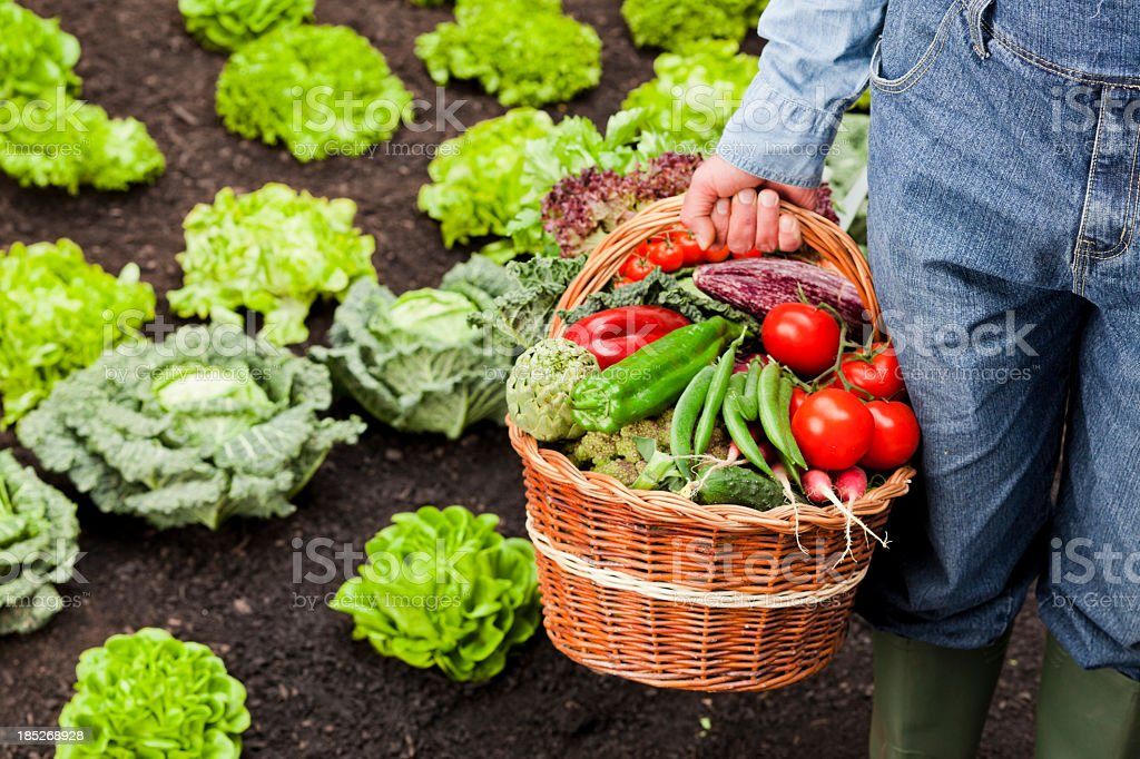 Farmer with basket full of vegetables stock photo