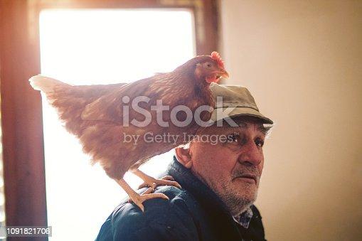 Chicken - Bird, Senior Adult, Farmer, Senior Men, Adult